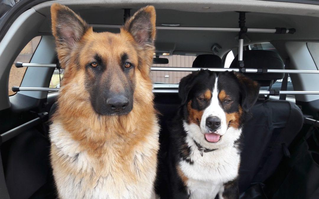 Hunde Foto: Anne und Lex und Seppu – Was stellen wir heute an?