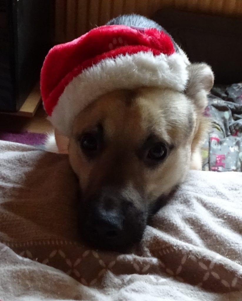 Hunde Foto: Susanne und Basti - Frohe Weihnachten