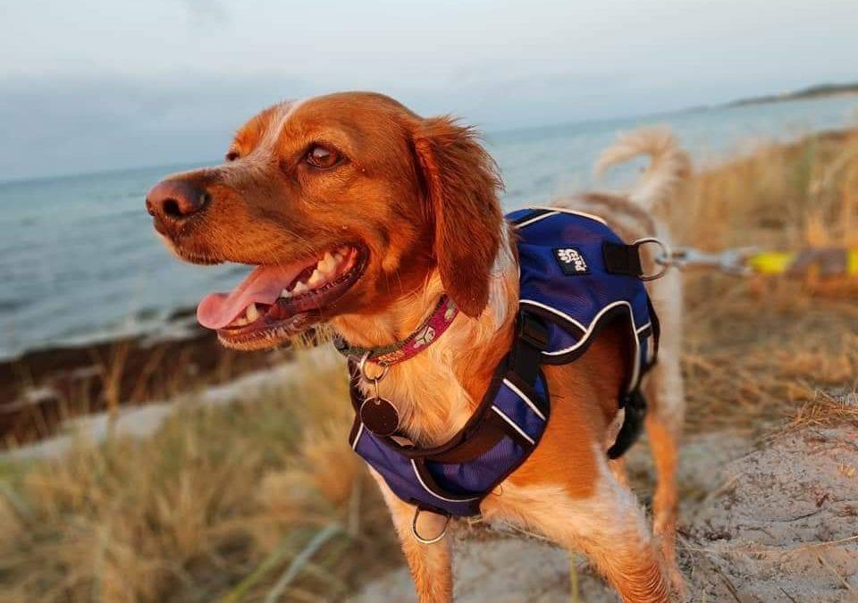 Hunde Foto: Helga und Frankie – Sonnenaufgang