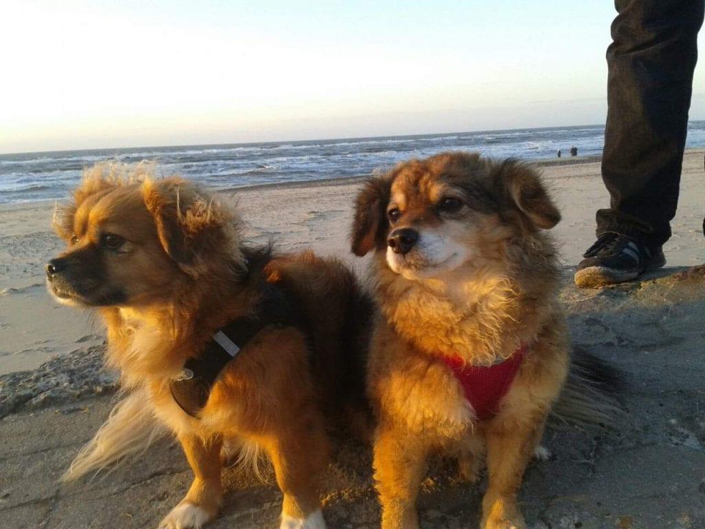 Hunde Foto: Katy und Dolly & Nelli - Keine zeit zum fotografieren