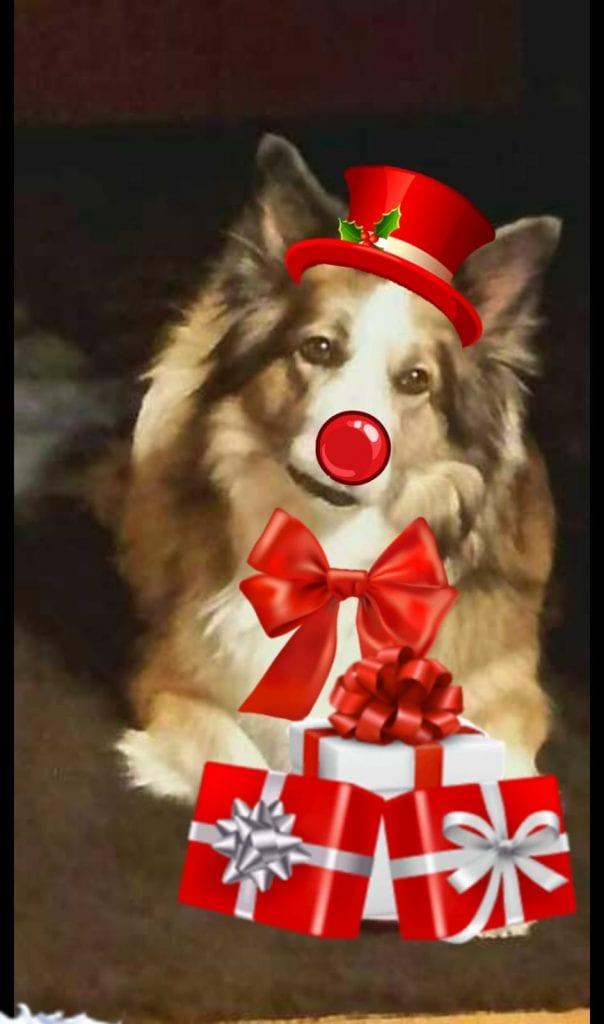 Hunde Foto: Martina und Sandy - Sandy unsere Weihnachts Hündin wuff.
