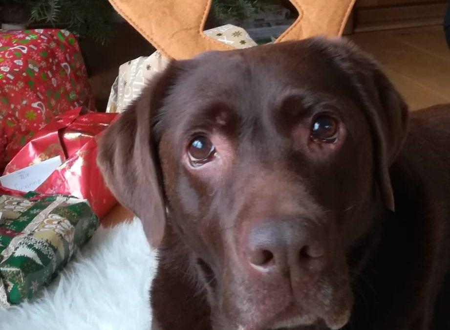 Hunde Foto: Susanne und Emma – Frohe Weihnachten
