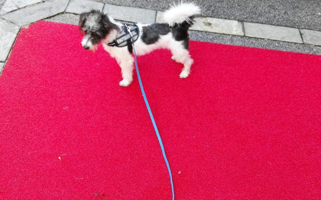 Hunde Foto: Petra und Bobby – Mensch ist das hier interessant
