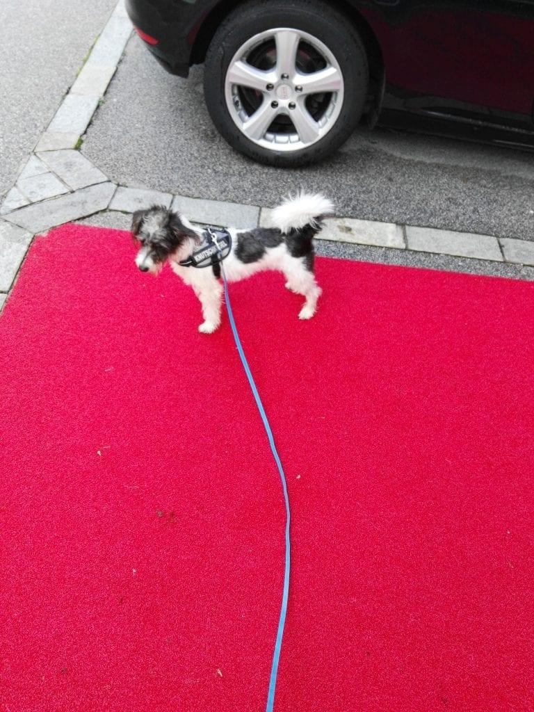 Hunde Foto: Petra und Bobby - Mensch ist das hier interessant
