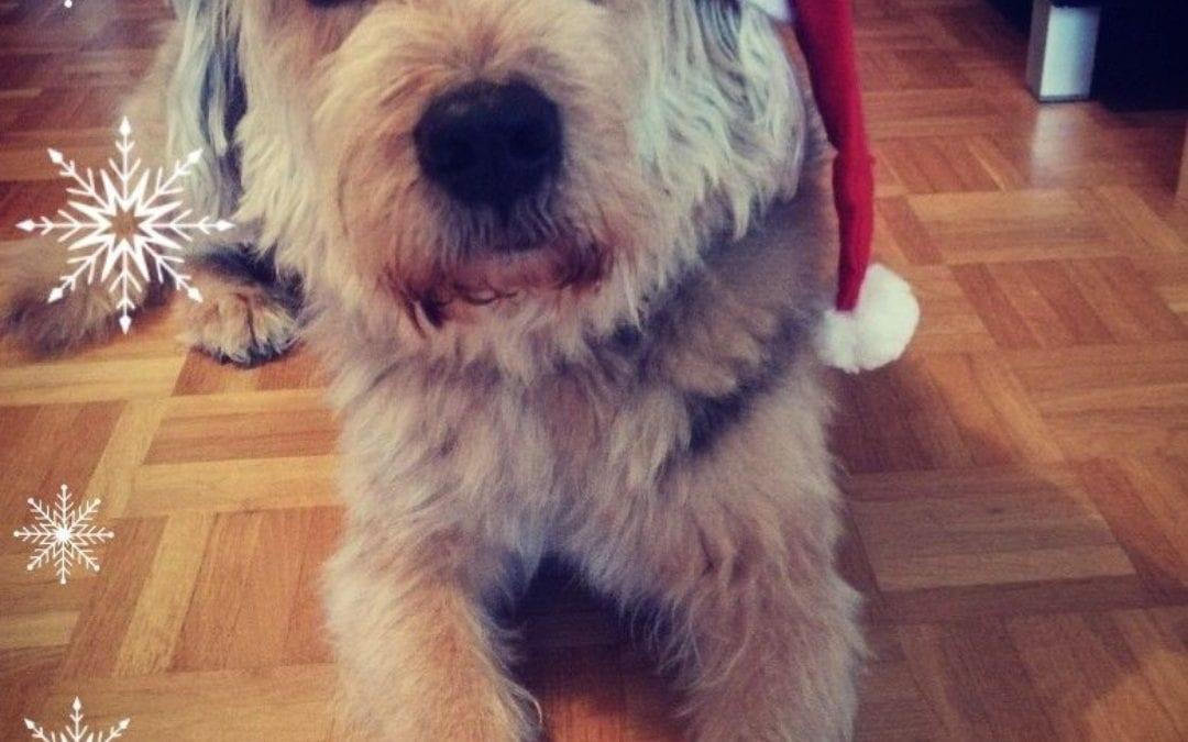 Hunde Foto: Jasmine und Malik – Unser Nikolaus 😍