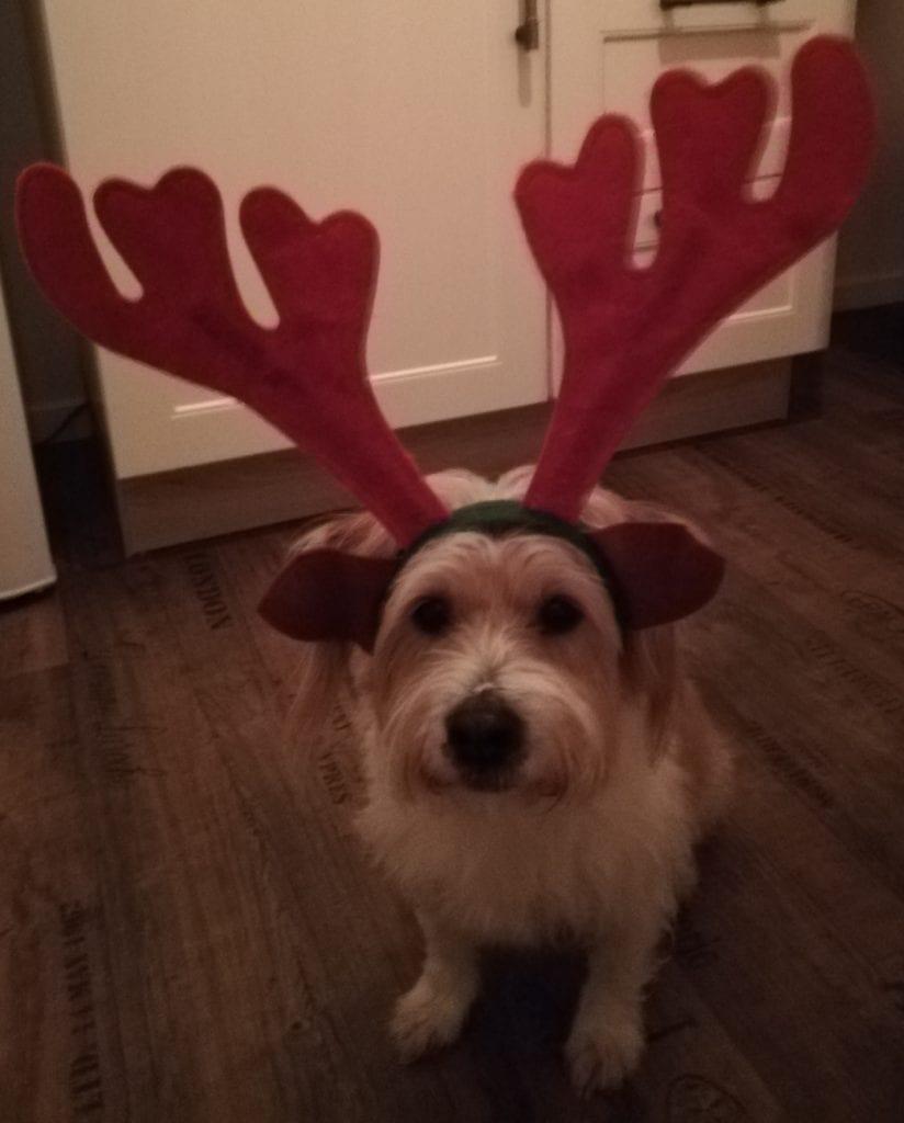Hunde Foto: Sandra und Milow - Santa's little helper