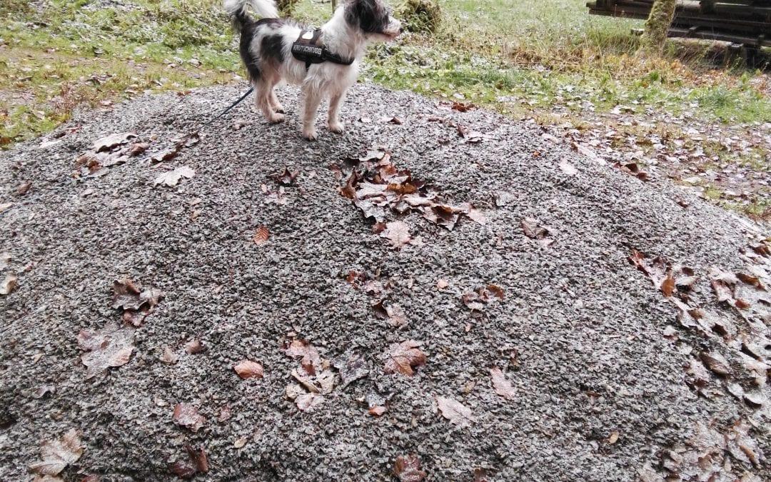 Hunde Foto: Petra und Bobby – Petra und Bobby