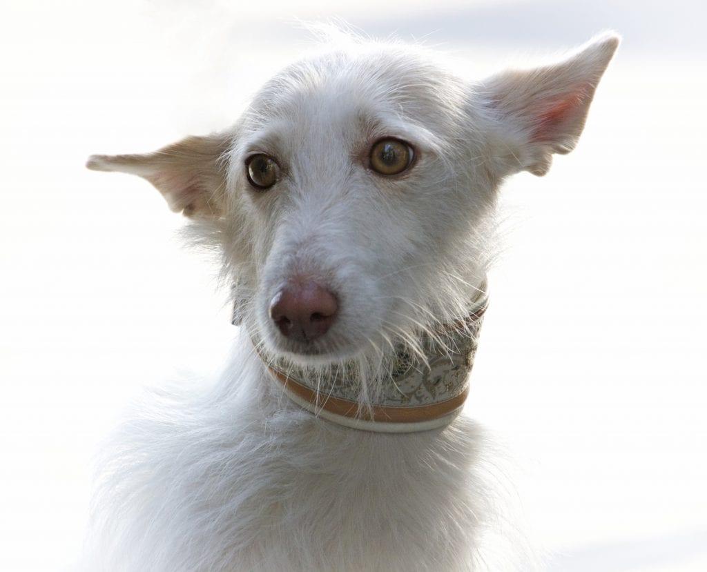 Hunde Foto: Christa und Yoda - Spanischer Sonnenschein