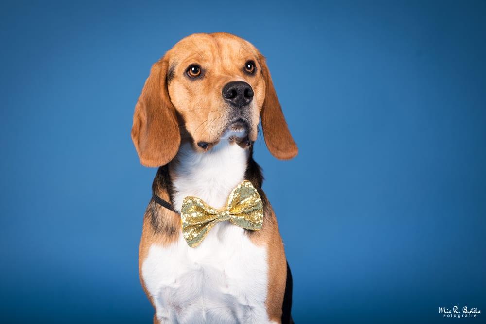 Hunde Foto: Peggy und Timmy – Ich hab mich fein gemacht 😉