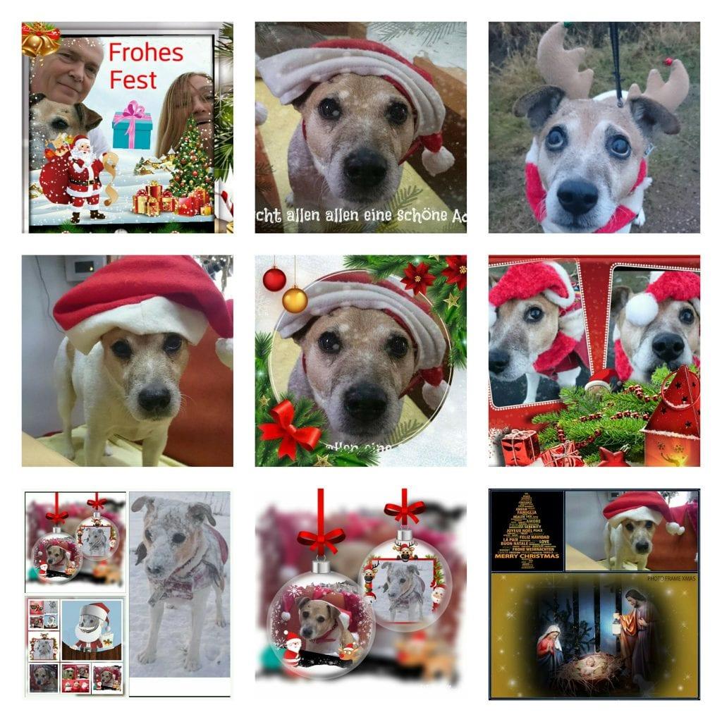 Hunde Foto: Marilena und Nicki - Weihnachtshund,