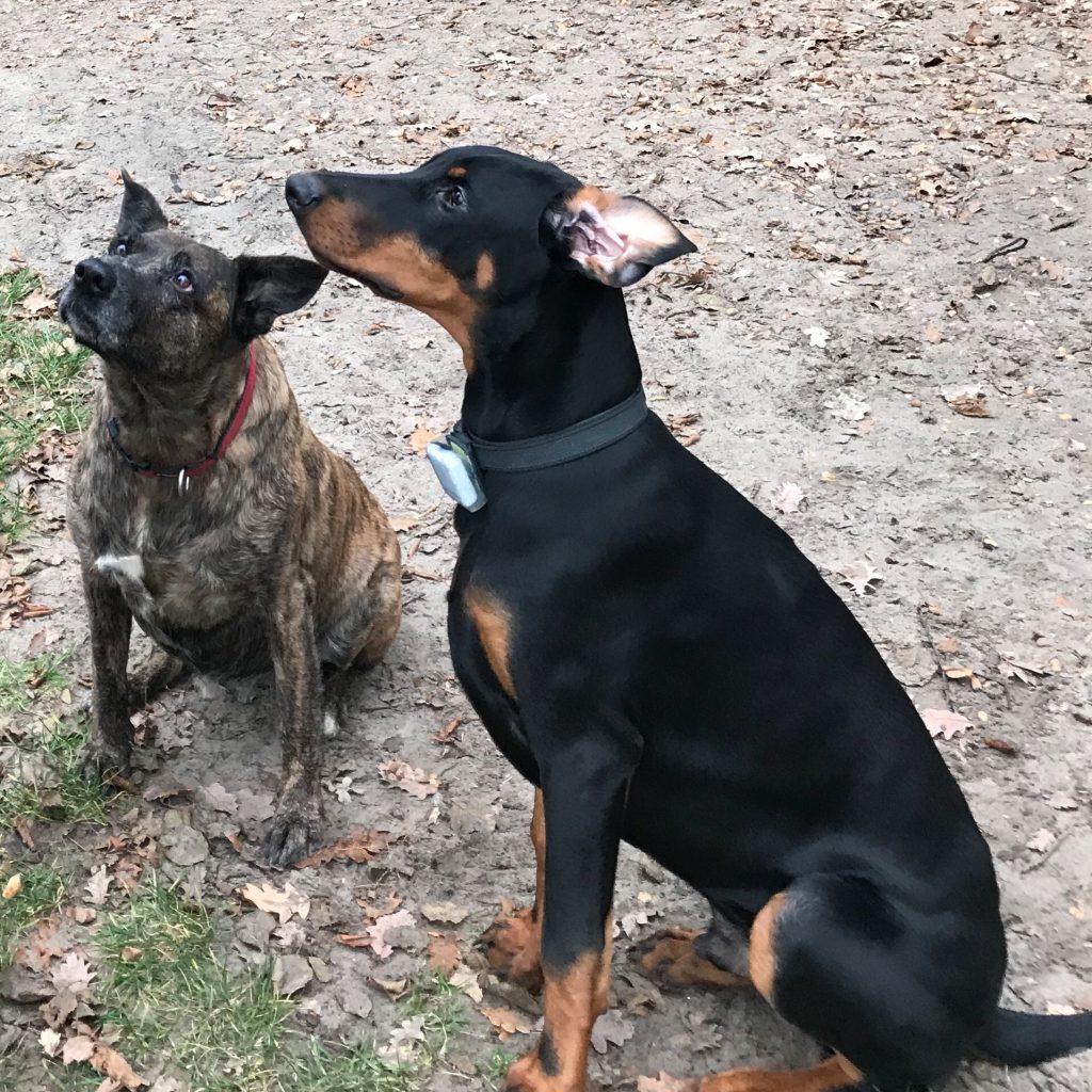 Hunde Foto: Heike und Vera & Floki - Unzertrennlich