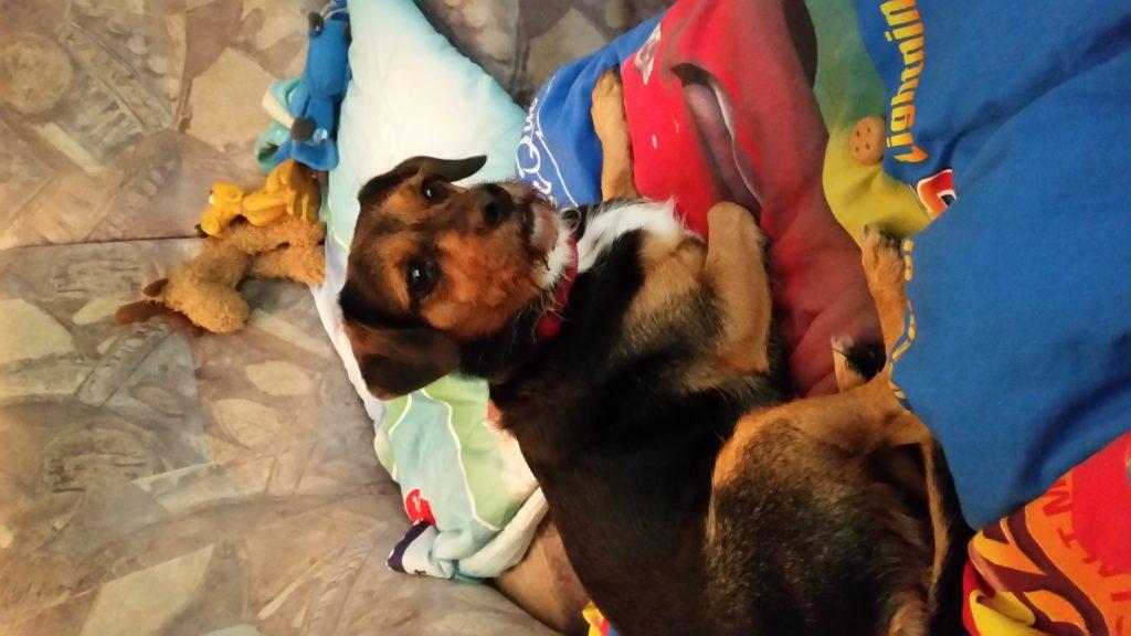 Hunde Foto: Olaf und Benny - Unser Gast