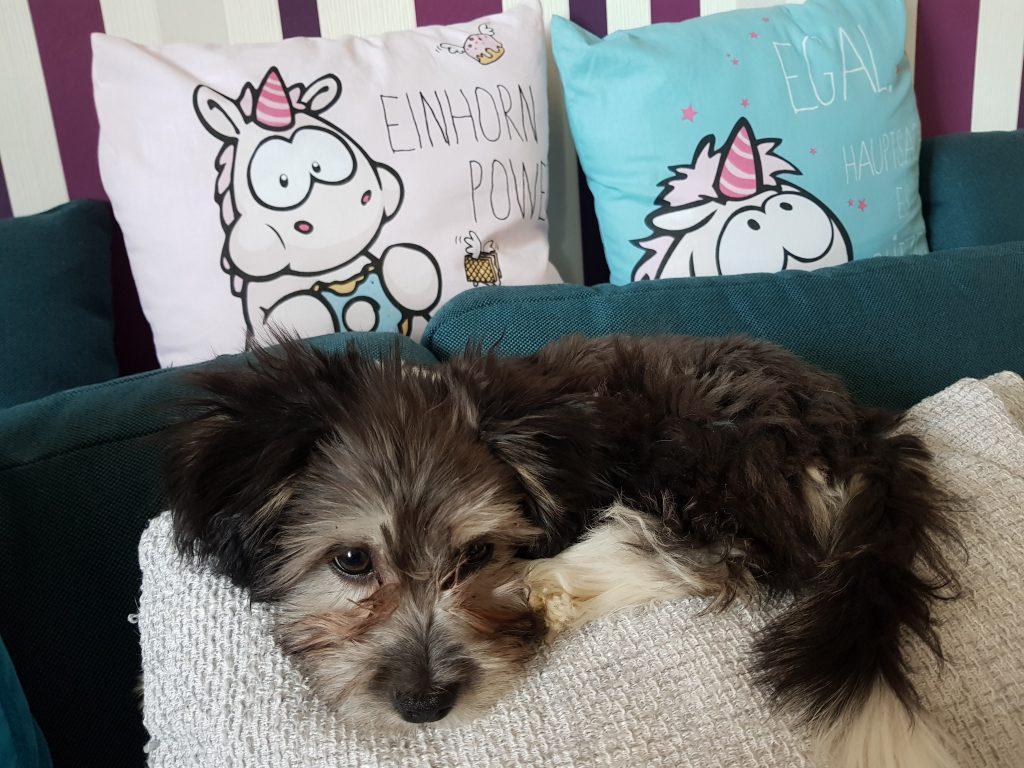 Hunde Foto: Maika und Benny - Schlafen...