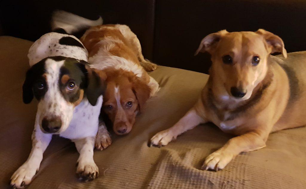 Hunde Foto: Helga und Bobby, Frankie & Maggie - 3 auf einen Streich