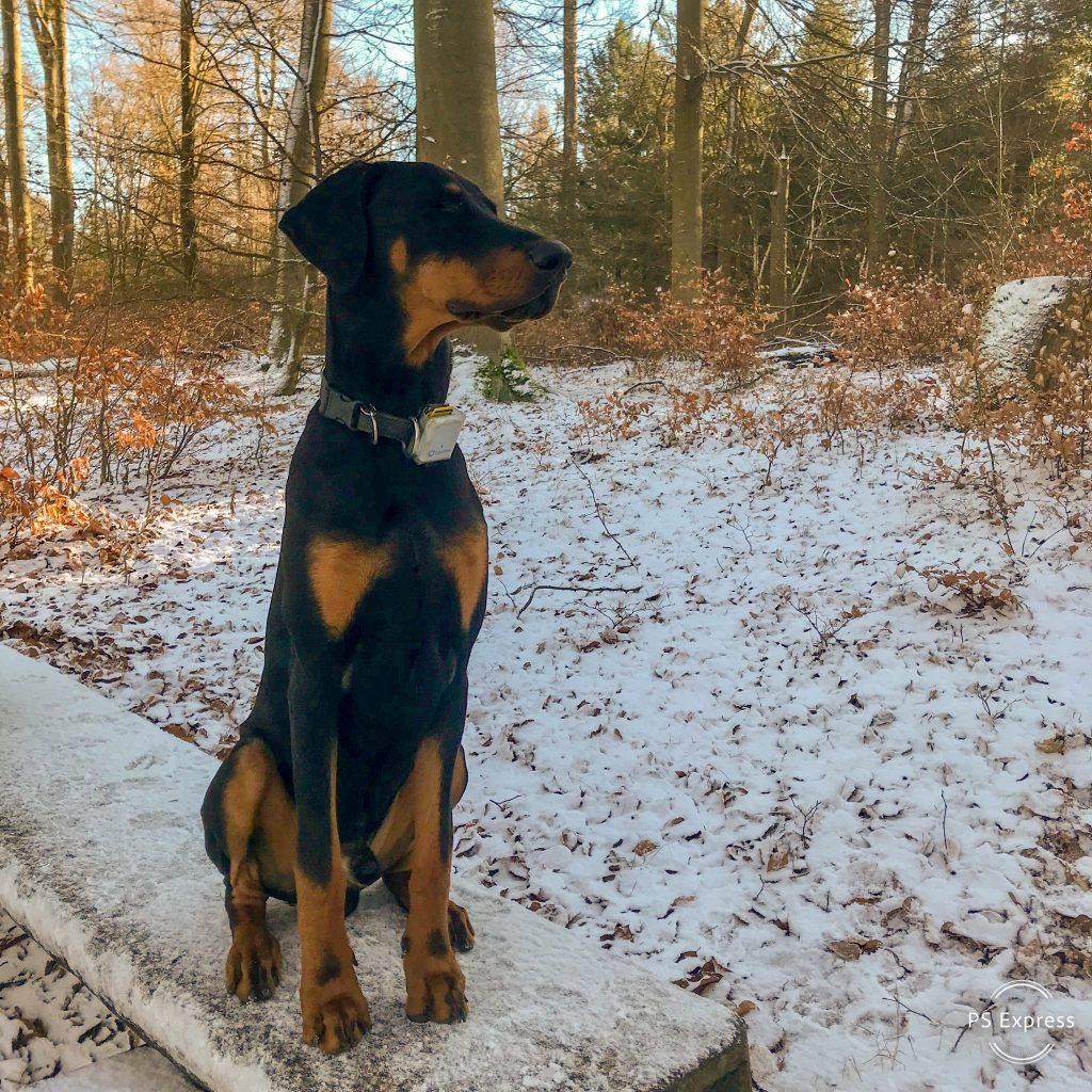 Hunde Foto: Heike und Floki - Mein erster Schnee