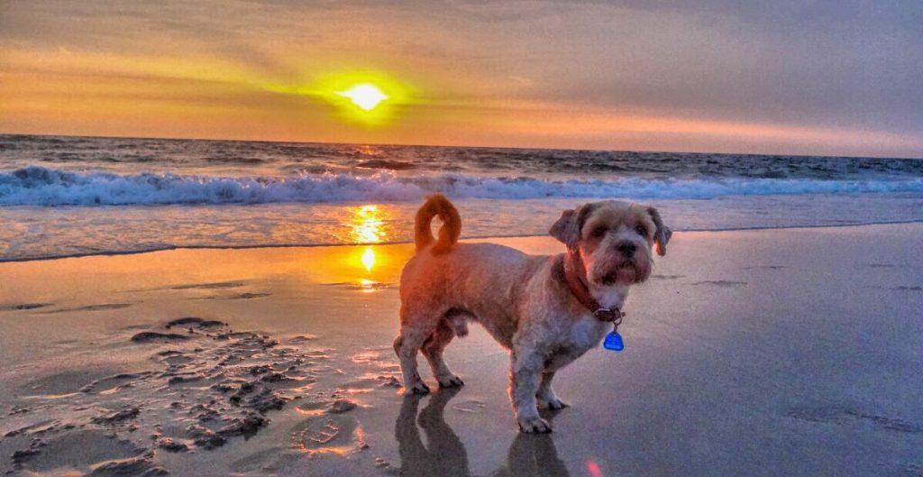 Hunde Foto: Rainer und Aschoka - Strandbewacher