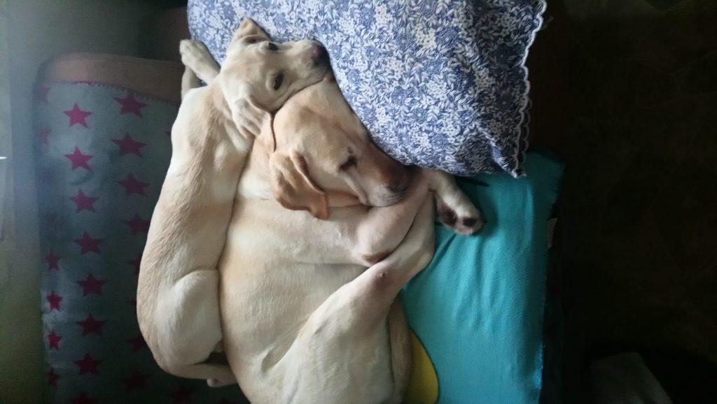 Hunde Foto: Conny und Tara und Finja - Tara und Finja unsere besten