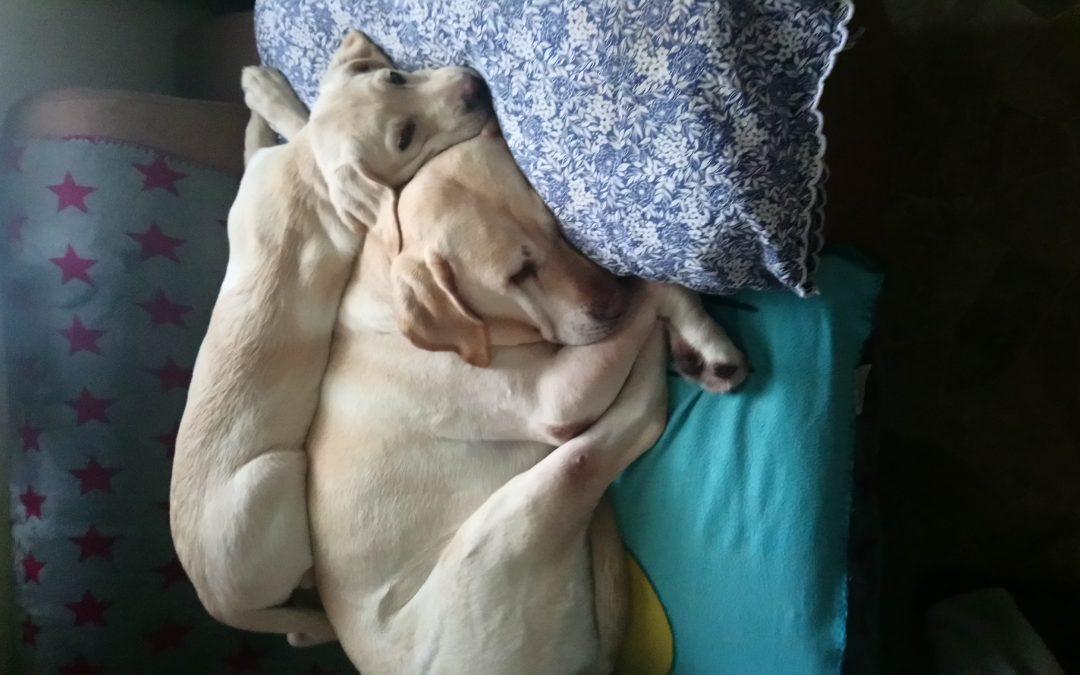 Hunde Foto: Conny und Tara und Finja – Tara und Finja unsere besten