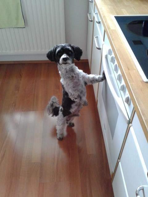 Hunde Foto: Andrea und Jimmy - Ist das Abendessen schon fertig?