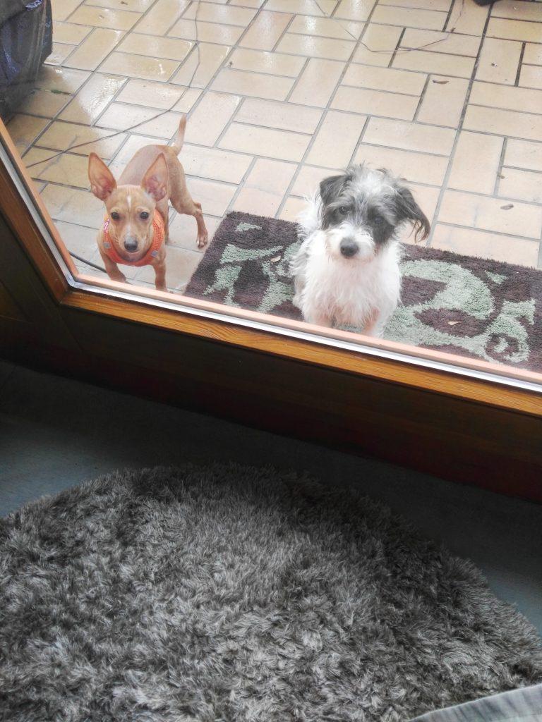 Hunde Foto: Petra und Bobby - Bobby mit seinem kleinen braunen freund