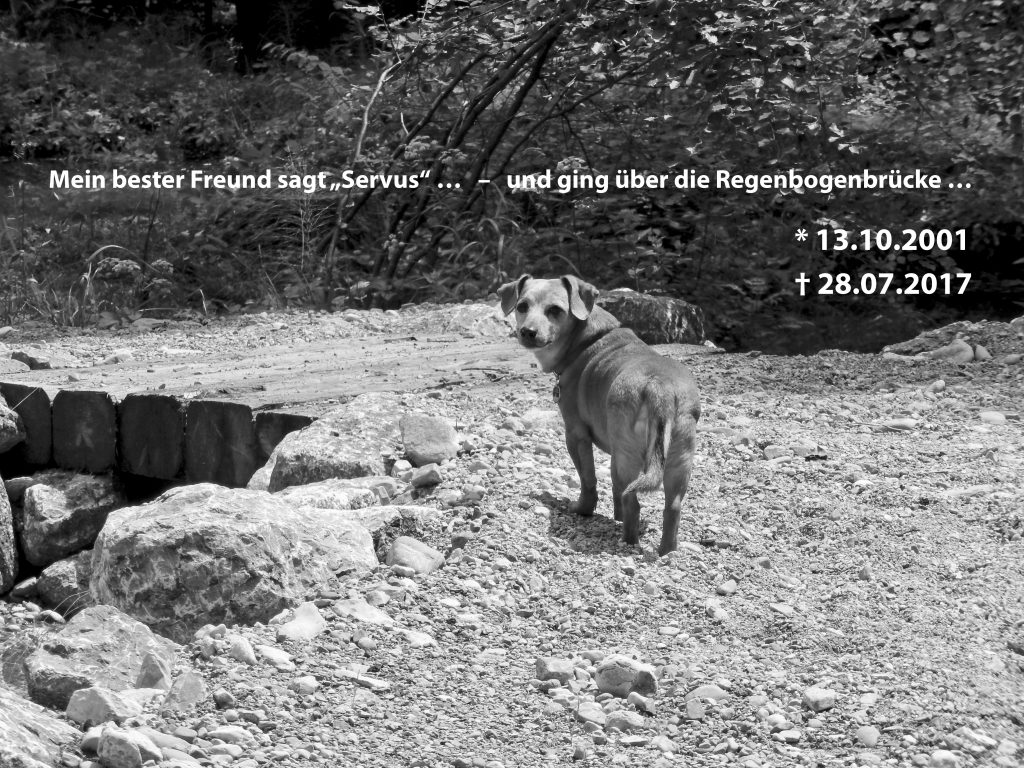 Hunde Foto: Bernhard und Mikie - Für immer trag' ich Dich in meinem Herzen