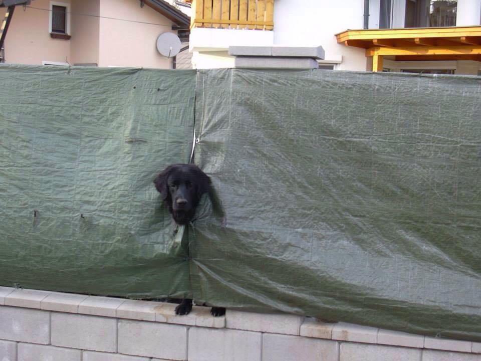 Hunde Foto: Romana und Cosimo - Neugierde will befriedigt werden :-)