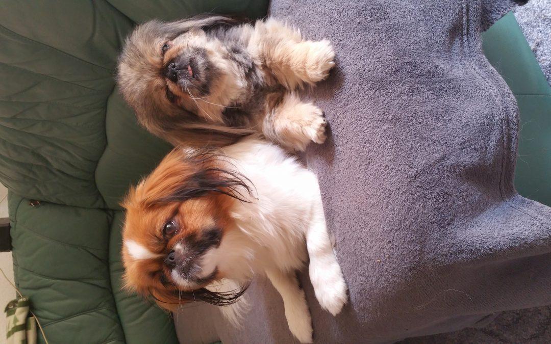 Hunde Foto: Sylvia und Emmi und Gina – Meine süßen Mädels