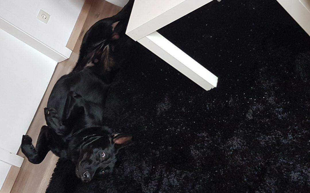 Hunde Foto: Wilma und Sky – Schön Chillen 😊