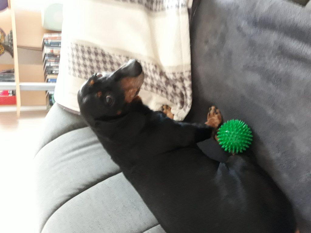 Hunde Foto: Tina und Leo - Mein Prinz