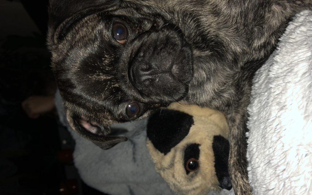 Hunde Foto: Kathrin und Theo – Unser Baby