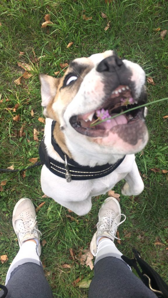 Hunde Foto: Sandrina und Selma - Quatschnase