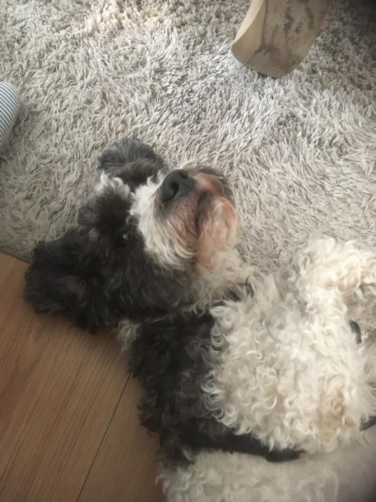 Hunde Foto: Michaela und Marlo - Marlo vollkommen entspannt