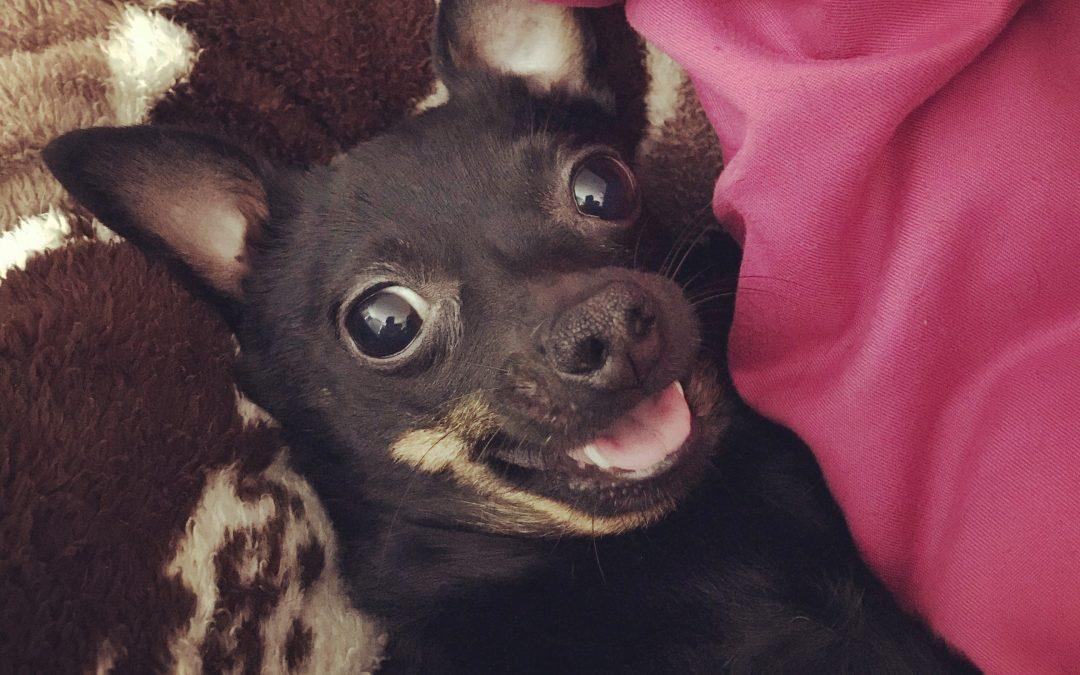 Hunde Foto: Stefanie und Cookie – Meine über alles geliebte Cookie – ich liebe einfach alles an ihr, vor allem ihr Lächeln ❤️