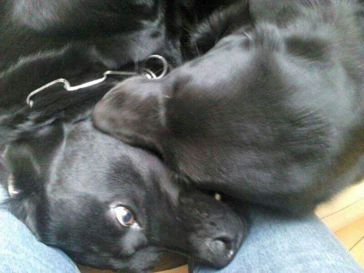 Hunde Foto: Silvia und Jamie Leika – Monsterhund