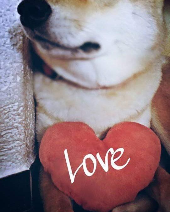 Hunde Foto: Romana und Xena – Liebe