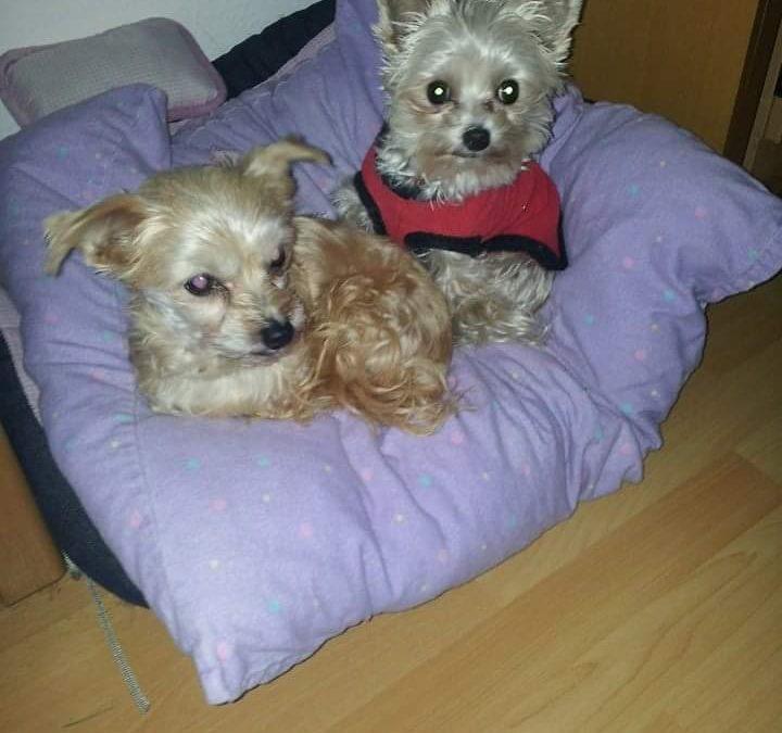 Hunde Foto: Waltraud und Trixy und Chanel – Zwei süße Engel