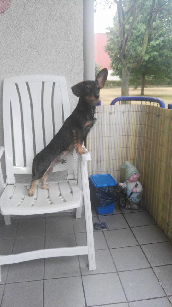 Hunde Foto: Daniela und Lucky - Der kleine Mann auf seiner Aussichtsplattform😊