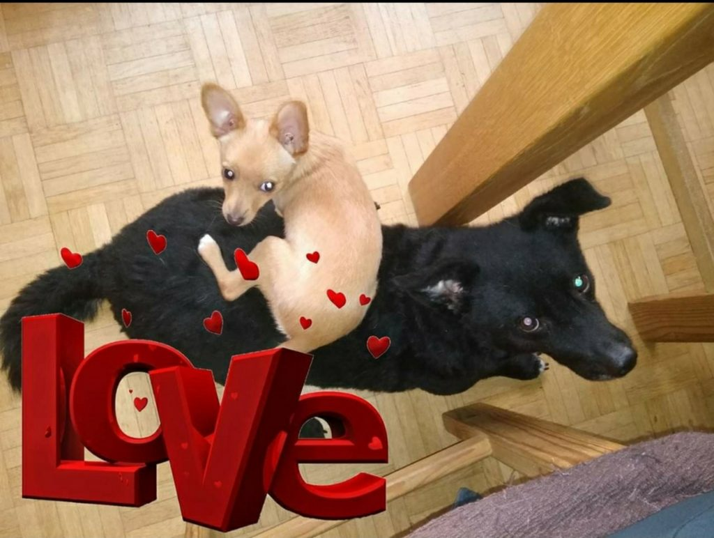 Hunde Foto: Sandra und Lina und Teddy - Love