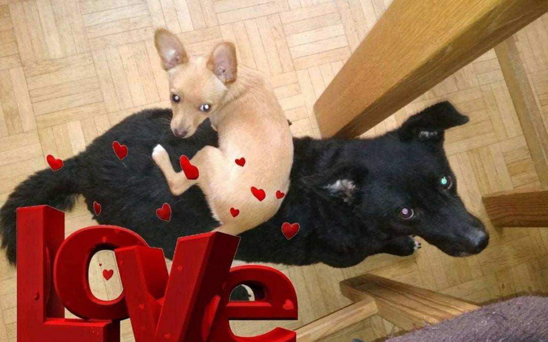 Hunde Foto: Sandra und Lina und Teddy – Love
