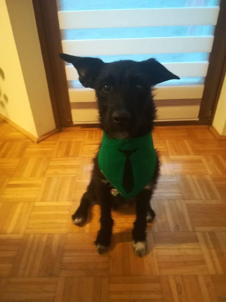 Hunde Foto: Heike und Loki - Wild, frech, einfach wunderbar ❤️