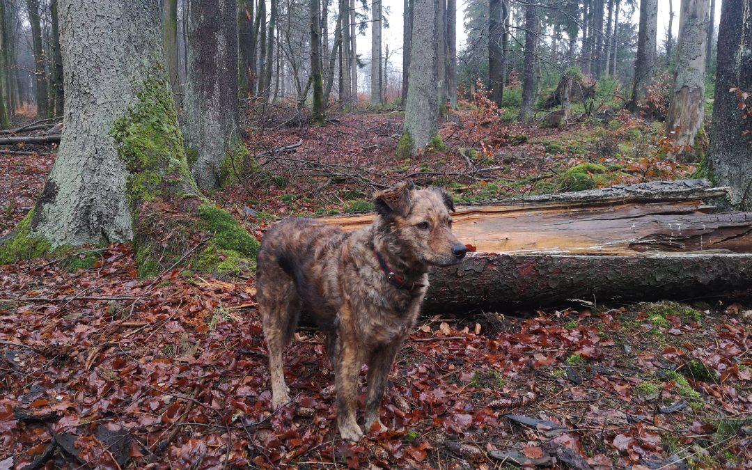 Hunde Foto: Michaela und Stella – Mein Chamäleonhund (klappt allerdings nur im Wald ohne Schnee 😉)