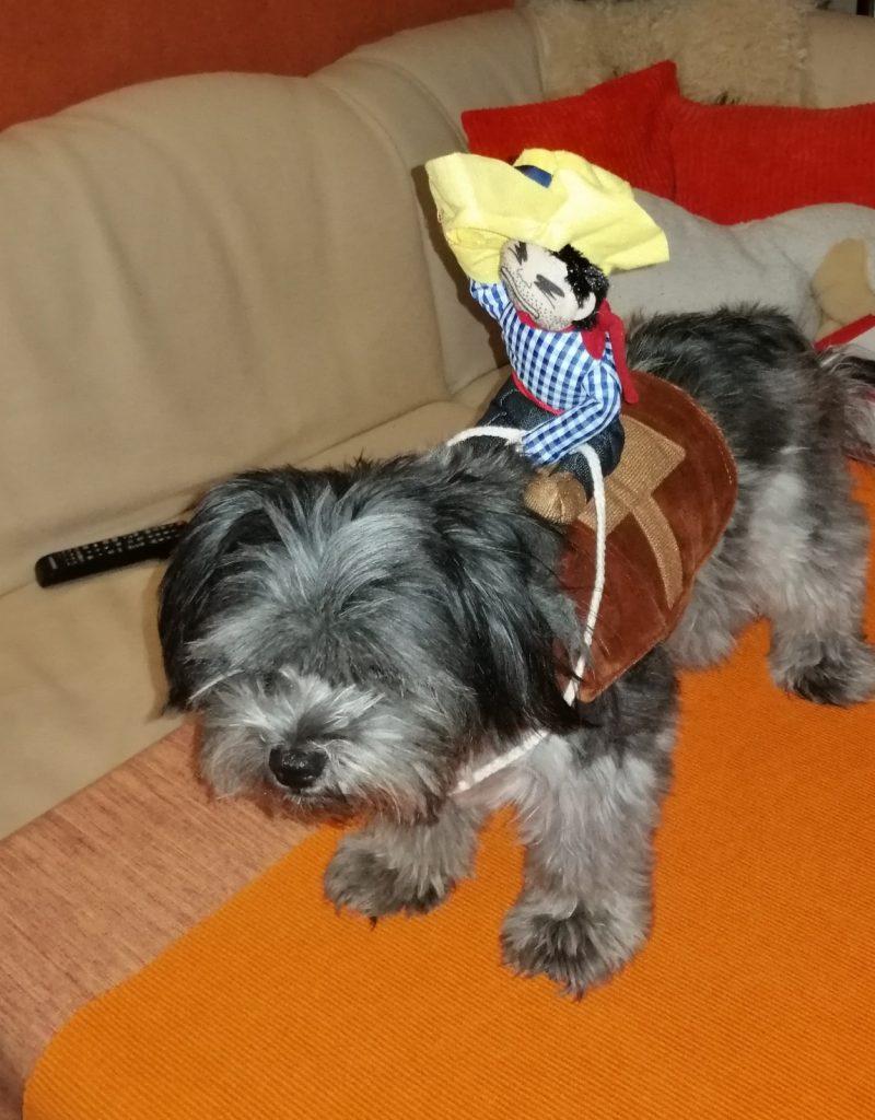 Hunde Foto: Klaus-Dieter und Lilly - Ich liebe mein Hund