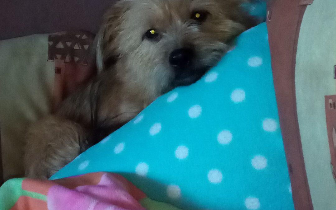 Hunde Foto: Ulla und Daisy – Weibchen