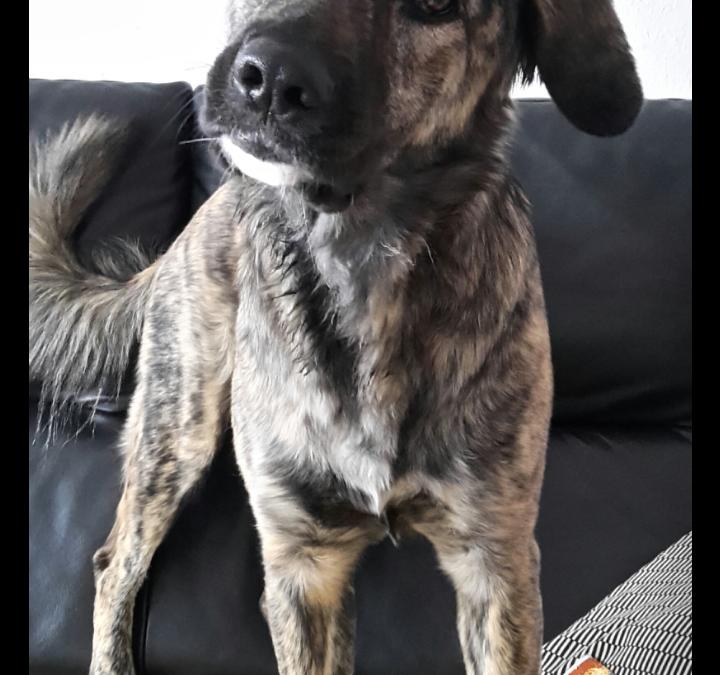 Hunde Foto: Alexandra und Maya – Ich höre auf's Wort, aber nicht auf's Erste