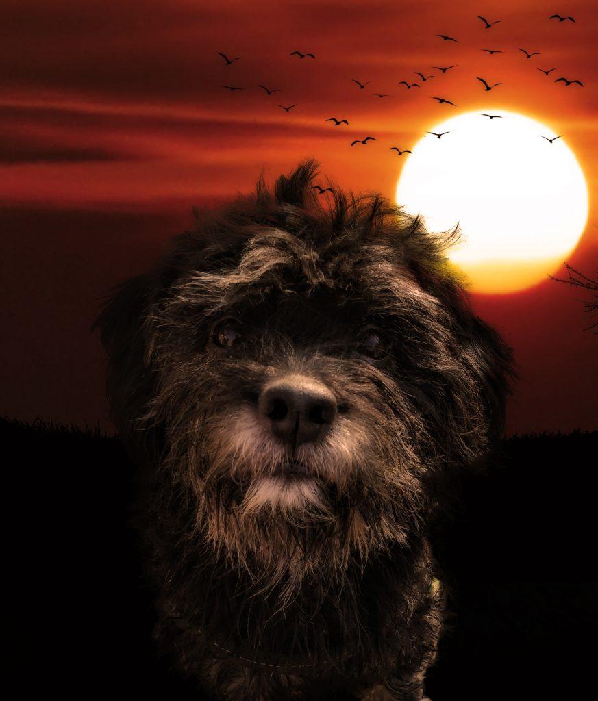 Hunde Foto: Sven und Casper - Sunny Casper