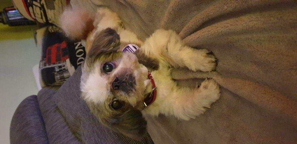 Hunde Foto: Manuela und Bonny - Meine treue Seelenhündin