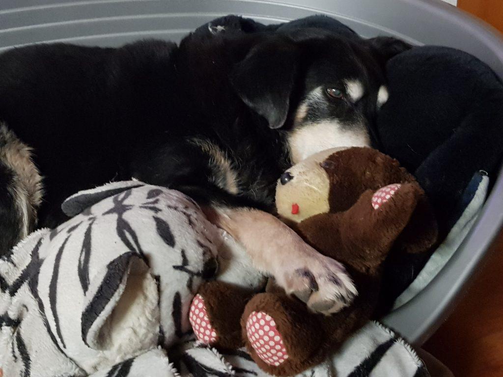 Hunde Foto: Karin und Chayenne - Ich schlafe