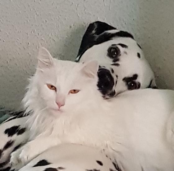Hunde Foto: Simone und Nimitz - Ziemlich beste Freunde