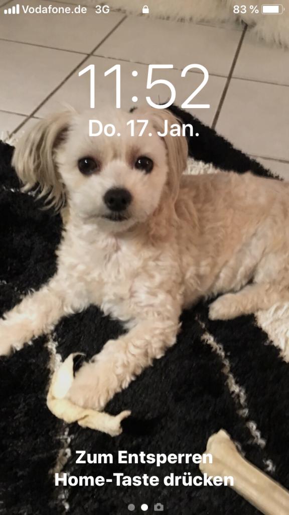 Hunde Foto: Ilona und Kinni - Kinni live
