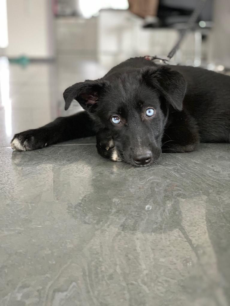 Hunde Foto: Giulia und Blue - Blauäugige Schönheit
